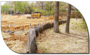 Tree Protection During Construction 1