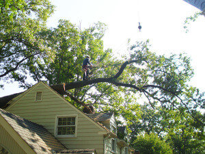 Tree Fell On Roof