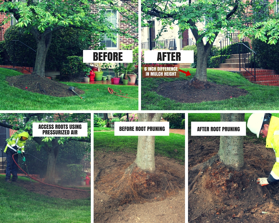 tree service arlington va 3
