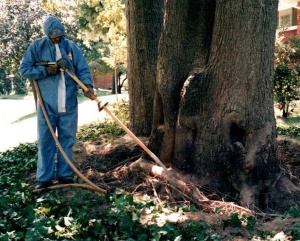 RTEC technician performing soil aeration in a tree's critical root zone.