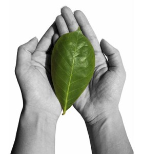 hand holding green leaf 344x373