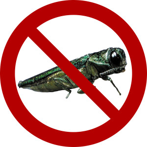 Emerald Ash Borer Protection Program