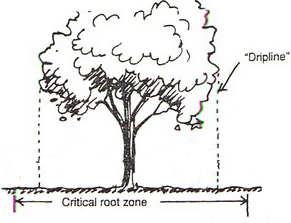 Critical Root Zone