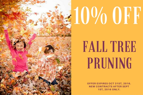 10% off tree pruning - tree service coupon