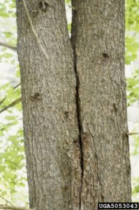 Crack In Tree