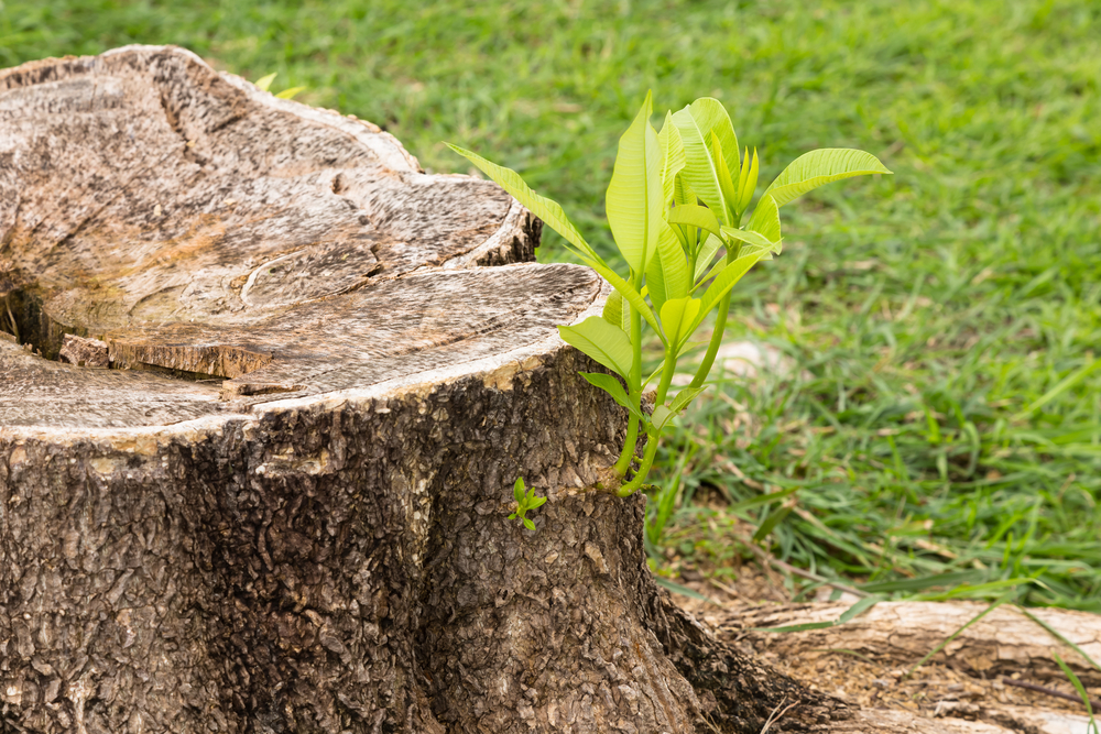 Tree Stump Removal - Stump Grinding In DC, Northern VA, MD