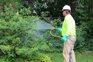 Common Tree Diseases - Diseases Caused By Fungi & Bacteria