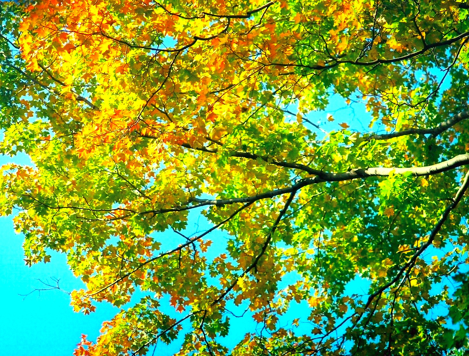 Early Fall Foliage Means Your Tree Is Stressed
