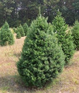unfortunately it does not hold heavy ornaments well so if you choose this tree opt for lightweight decorations