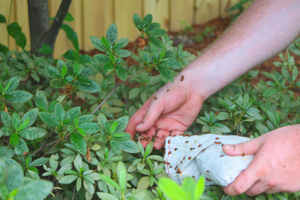 Beneficial Insect Release