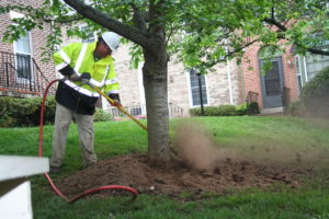 8 essential summer tree care steps 2