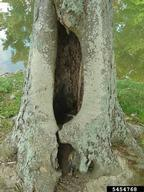 signs your tree is sick - tree cavity