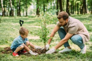 5 Most Important Fall Tree Care Tips 1