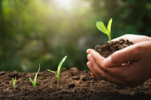 4 Essentials For Soil Health