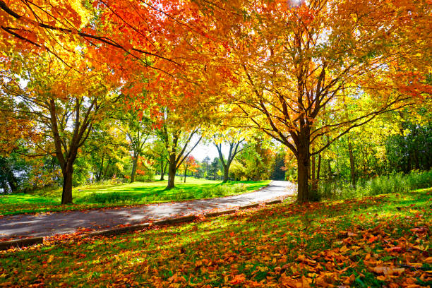 guide to fall color