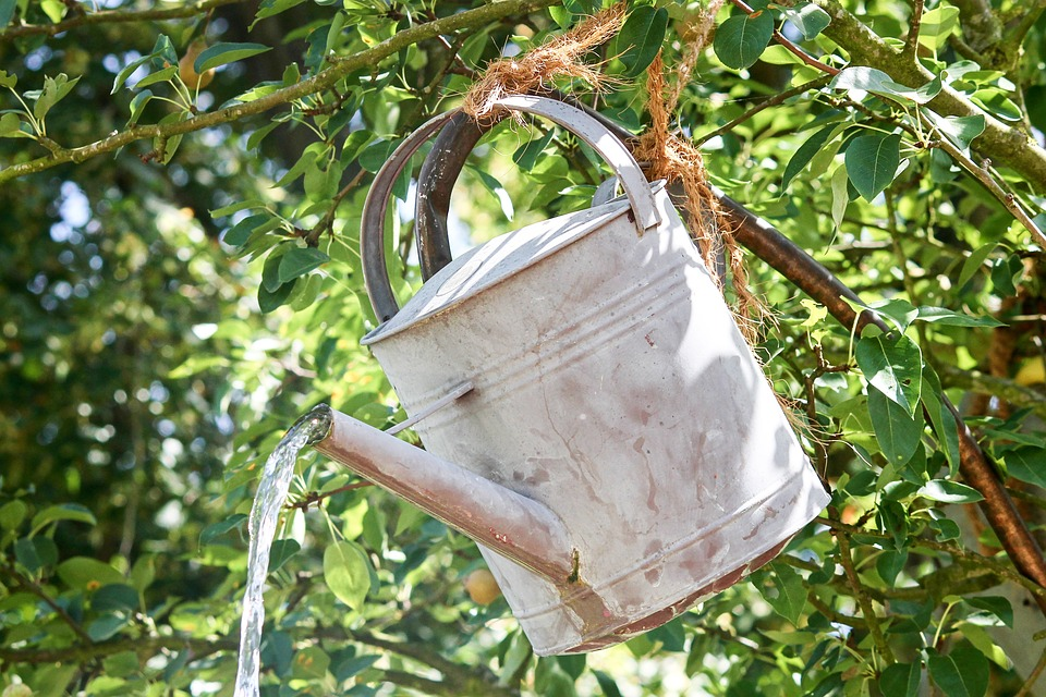 Watering Can for Stressed Trees