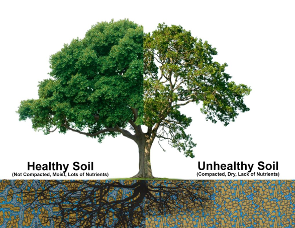 healthy soil versus unhealthy soil compare and contrast compares nutrients