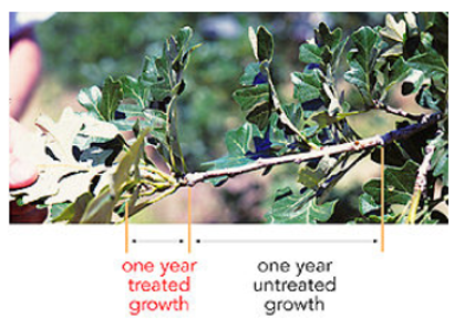 tree growth regulator difference diagram
