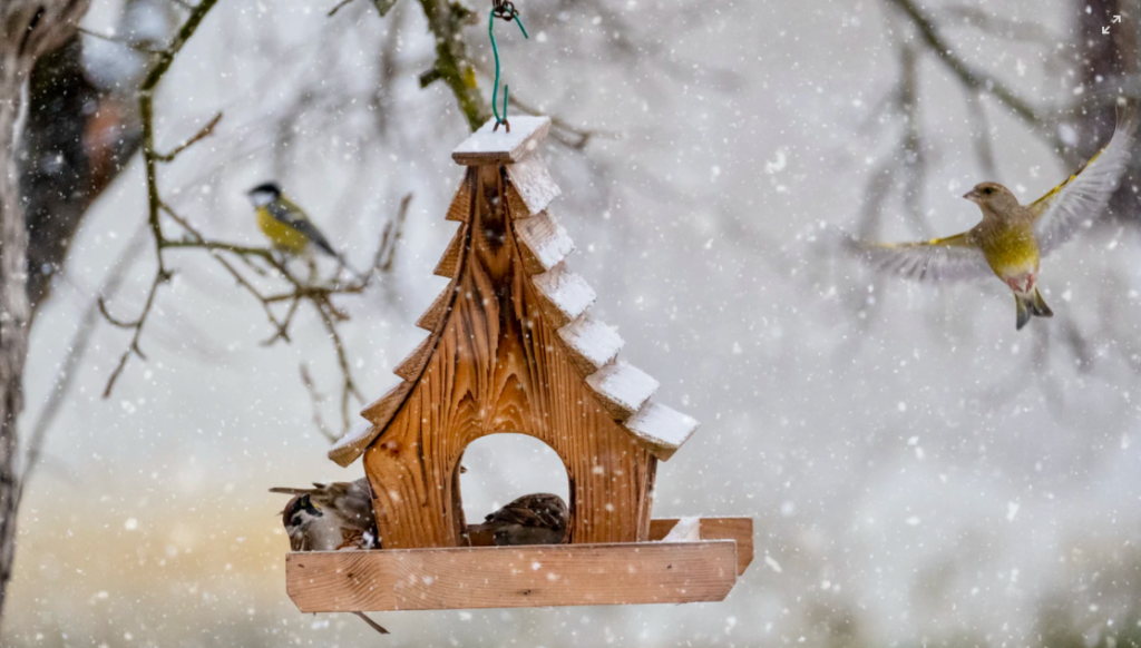 A Christmas tree can be recycled to help provide shelter for animals like birds and rabbits