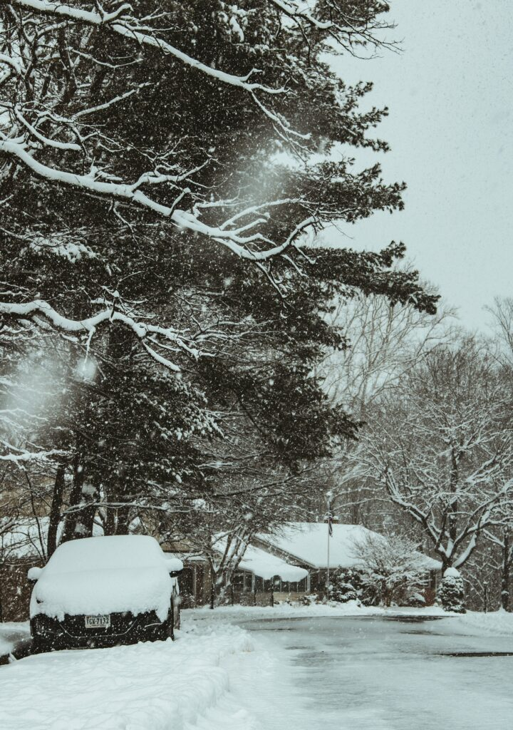 protect trees from heavy snow in winter, winter storm wrecks havoc