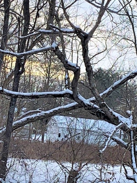 heavy snow on tree branches in winter storm