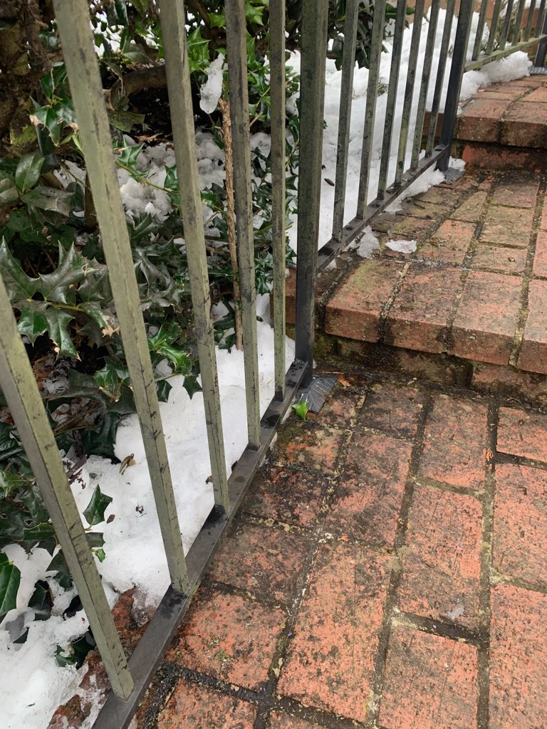 Black sooty mold found on walkway patio outside home