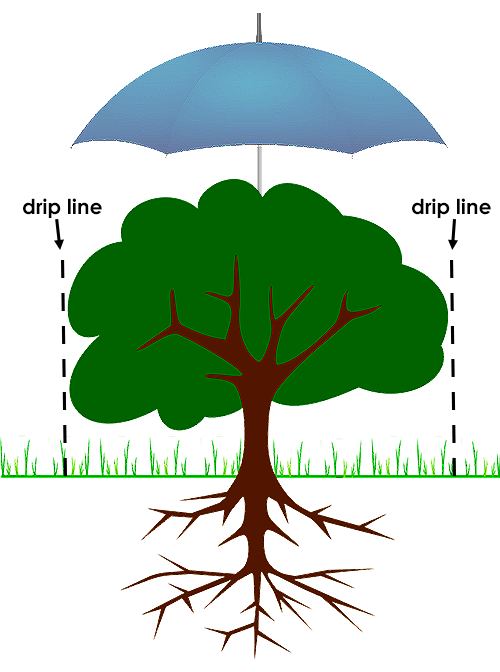 umbrella over tree, illustrates the drip lines to be watchful of when landscaping around trees
