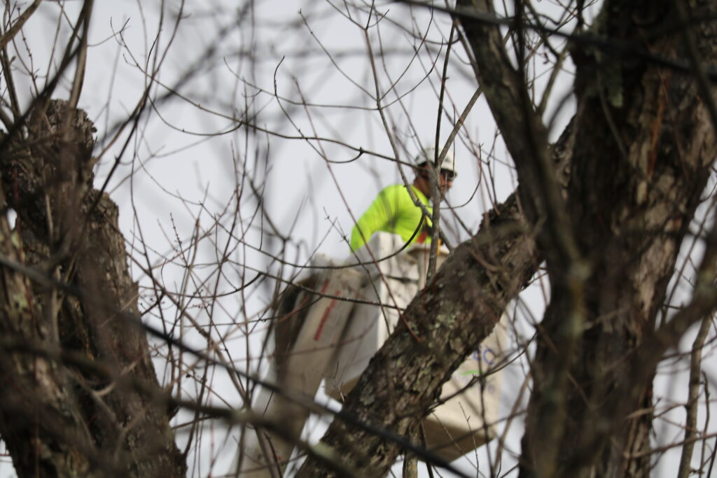 tree trimming service trimmer in tree