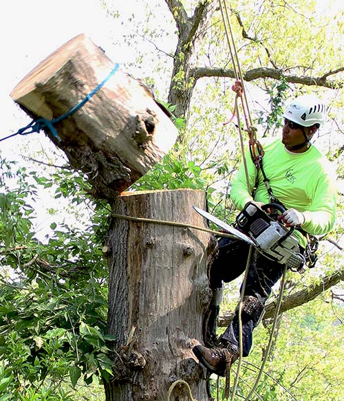 RTEC Treecare tree service experts executing tree removal work on a local Virginia property