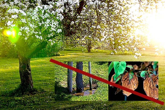 how to water trees and avoid underwatered or overwatered trees