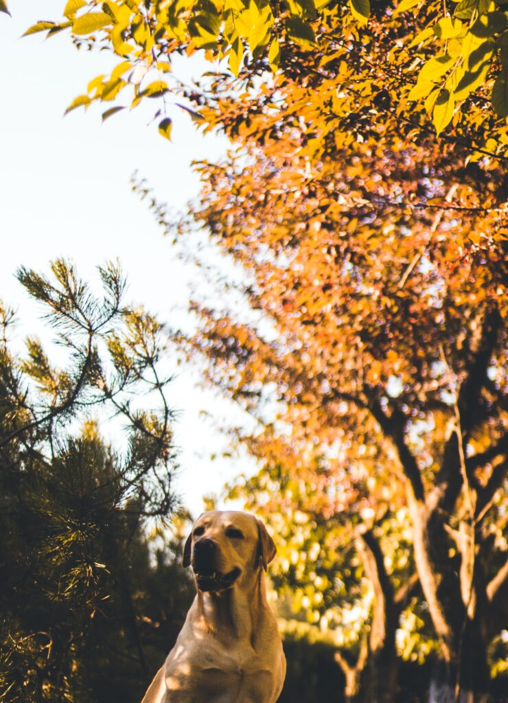 dog by tree: how to water your trees properly