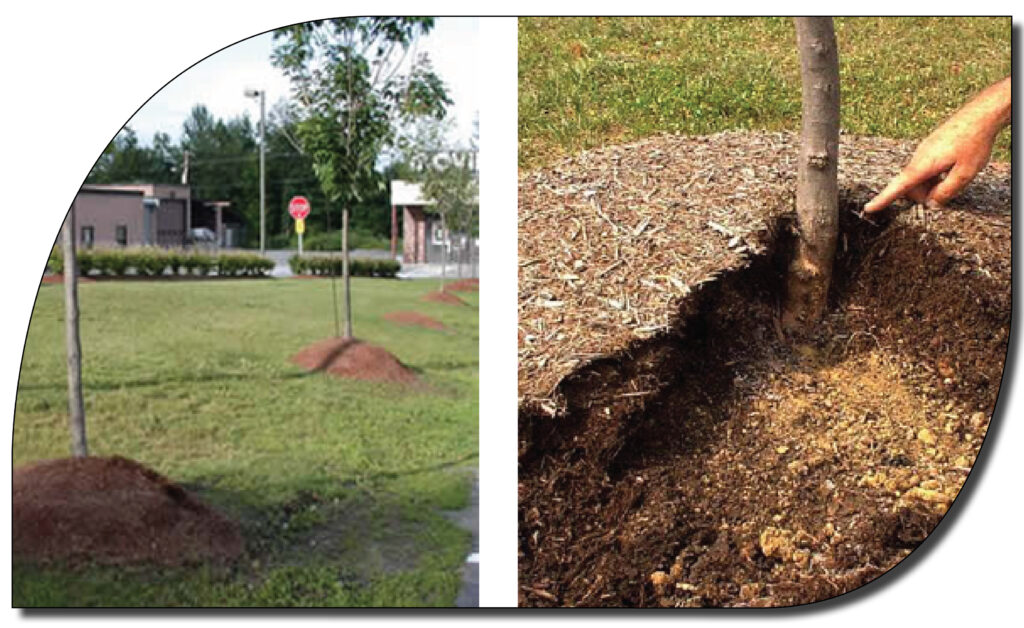 mulch volcano - how not to mulch a tree