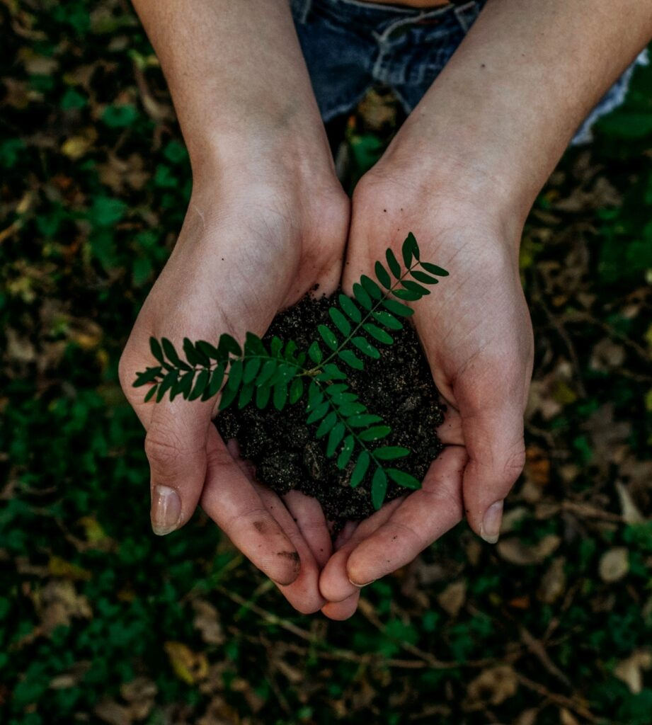tree sapling in hand, make sure to know how to water trees properly as they grow